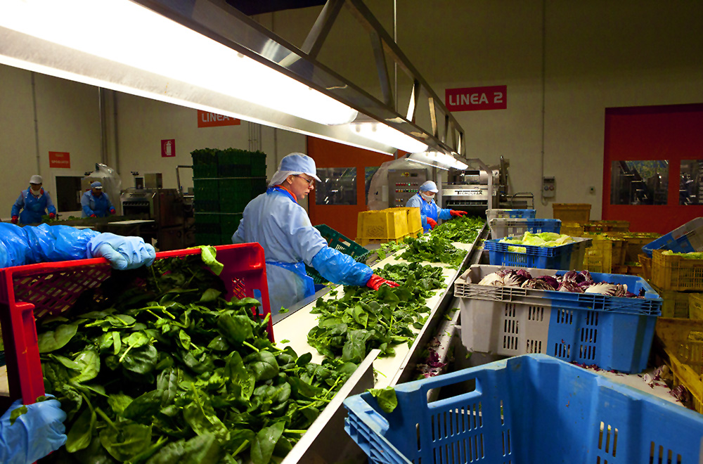 During the next stage, the vegetables are cleaned and peeled, and are then carefully checked, selected and sorted.